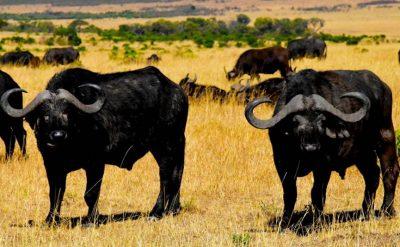 Oeganda en Tanzania rondreis
