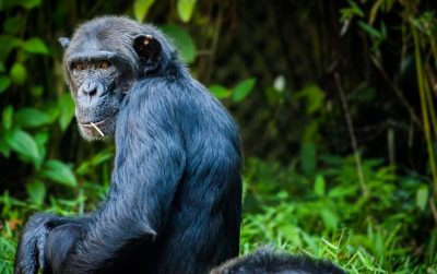 Rondreis Oeganda en Rwanda door Sawadee