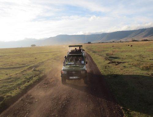6 redenen om absoluut een keer op safari te gaan!