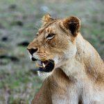 mooiste safariparken van Afrika