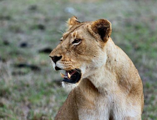 De 10 mooiste safariparken van Afrika