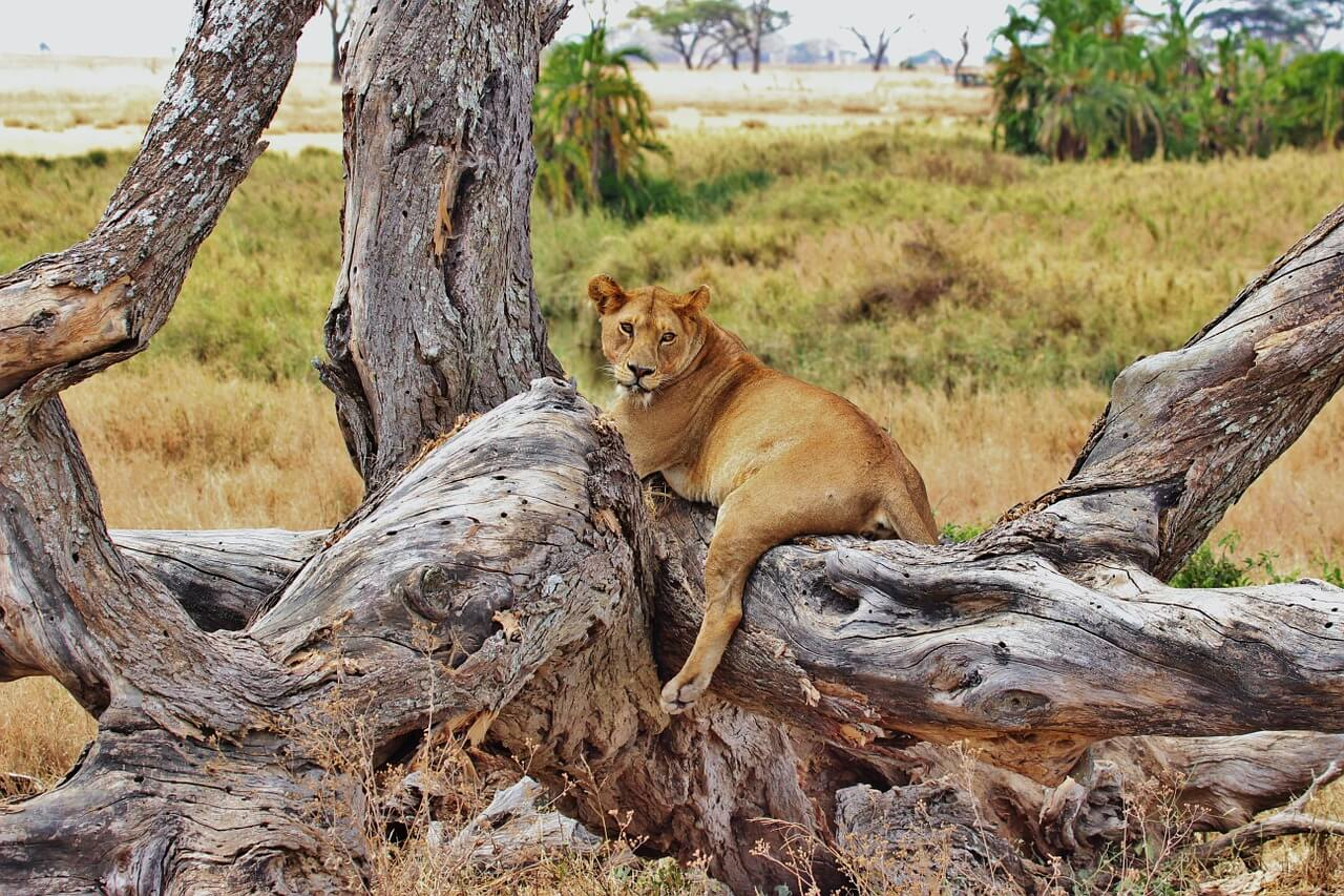 Tanzania bezienswaardigheden