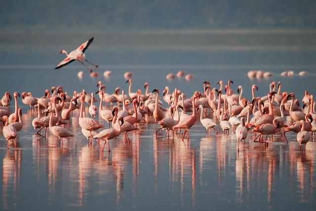 flamingo's in Tanzania